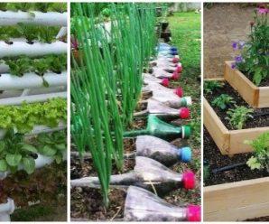 Ideas para Montar tu Huerto de Vegetales en Casa